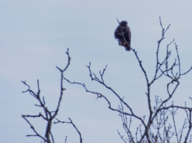 scotland trip kite