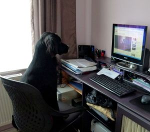 Our furry companions can be trained to do a number of useful tasks...