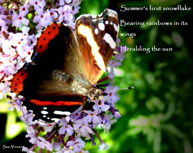 Summer's first snowflake  Bearing rainbows in its wings Heralding the sun