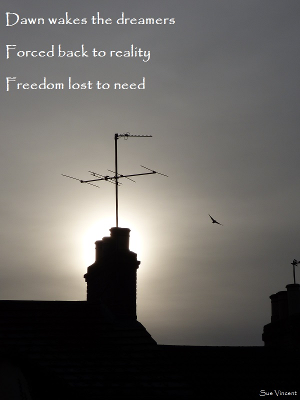 Dawn wakes the dreamers, forced back to reality,freedom lost to need