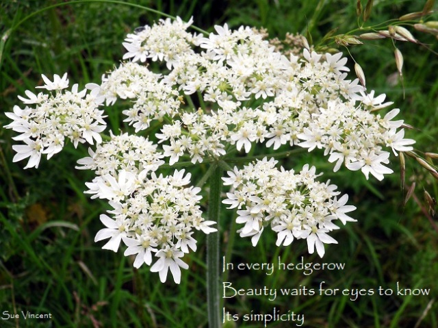 In every hedgerow beauty waits for eyes to know its simplicity