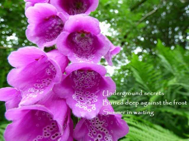 Underground secrets, buried deep against the frost, Summer in waiting