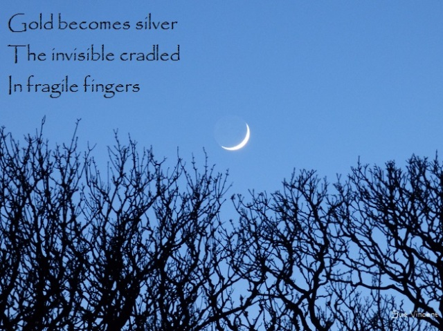 gold becomes silver, the invisible cradled in fragile fingers
