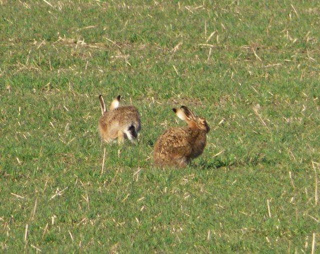 kites and hares walk 185