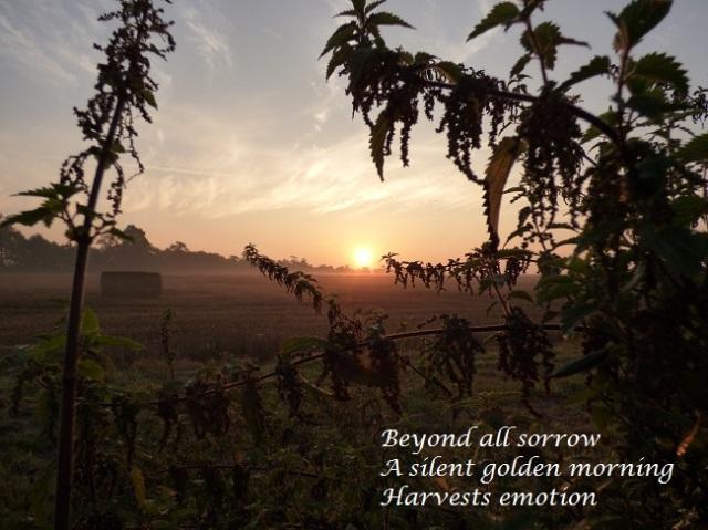 beyond all sorrow a silent golden morning harvests emotion