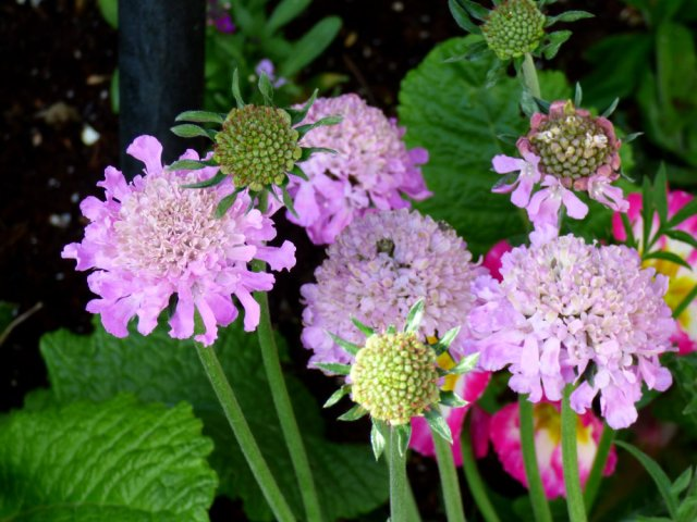 garden flowers birds 045