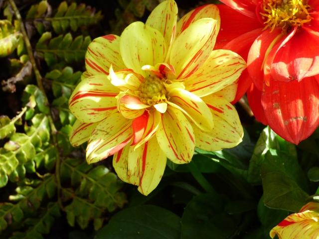 garden flowers birds 094
