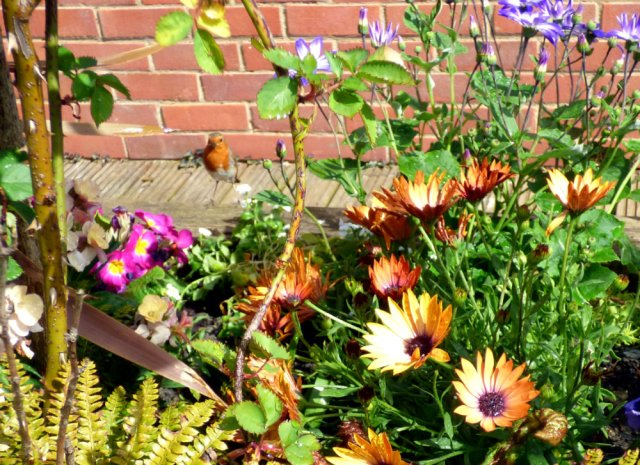 garden flowers birds 163