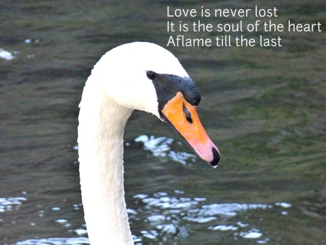 Love is never lost It is the soul of the heart Aflame till the last
