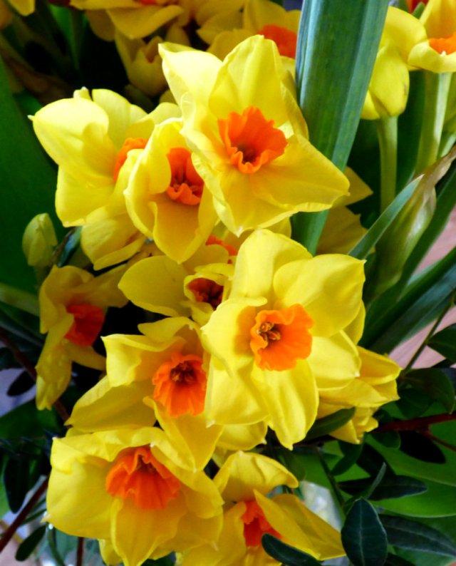 spring 011