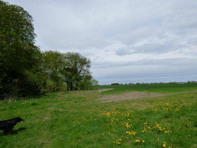 spring walk kite 061