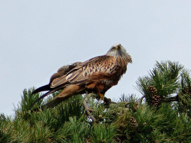 spring walk kite 074