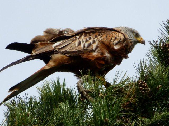 spring walk kite 077