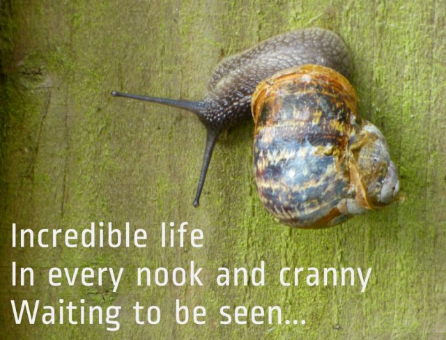 Incredible life In every nook and cranny Waiting to be seen...