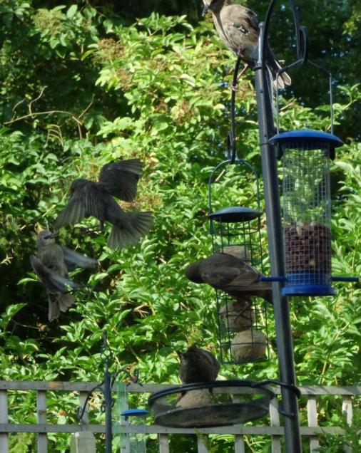 bird feeder (13)
