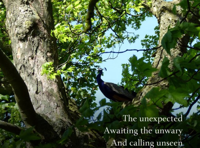 The unexpected, awaiting the unwary, and calling unseen
