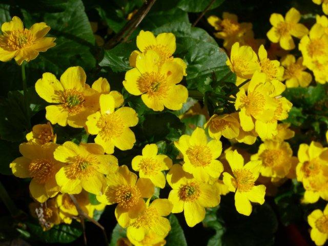 garden flowers birds 095