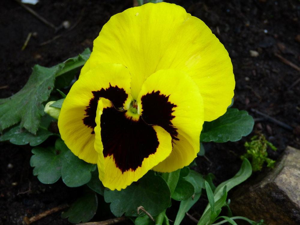 garden flowers birds 160
