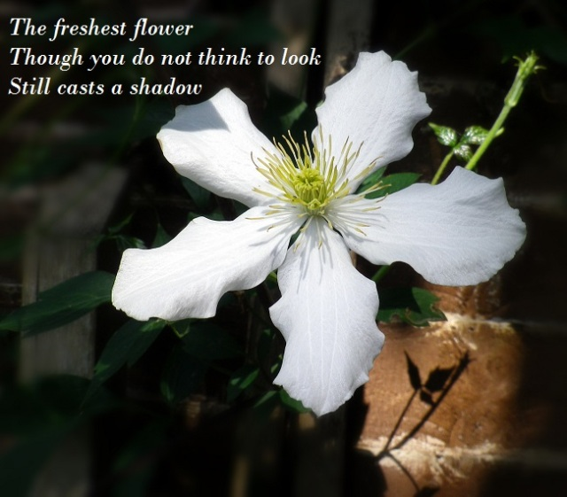 The freshest flower Though you do not think to look Still casts a shadow