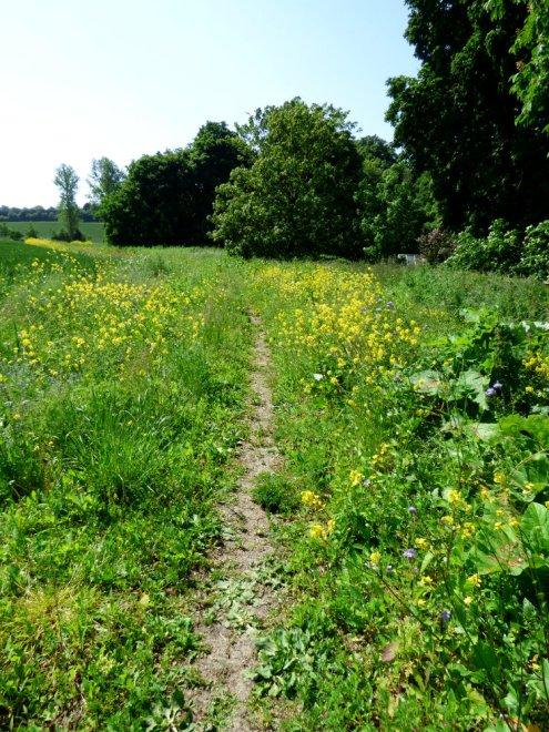 Avebury SE weekend - fields