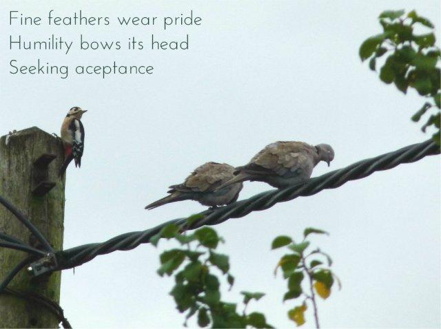 Fine feathers wear pride Humility bows its head Seeking aceptance