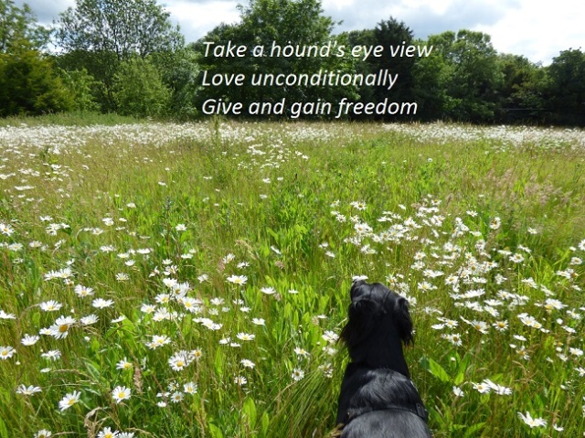 Take a hound's eye view Love unconditionally Give and gain freedom