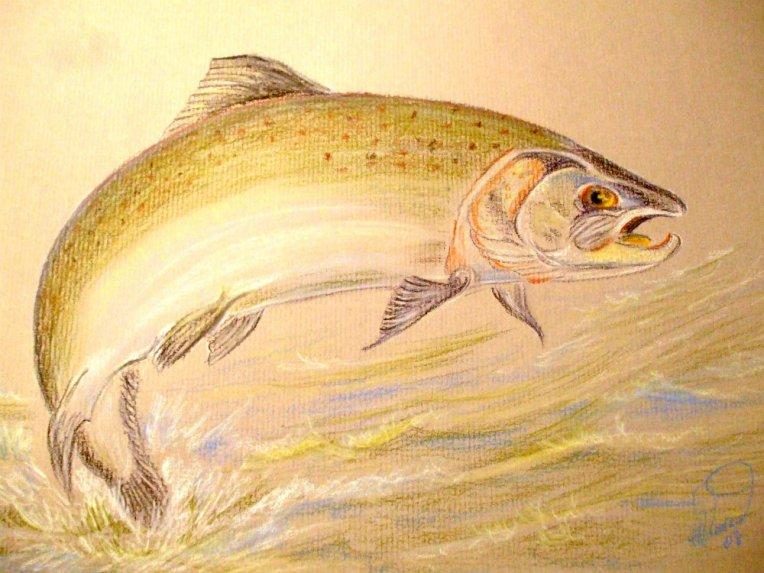 salmon 001
