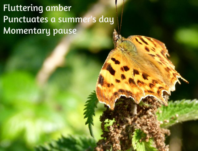 Fluttering amber Punctuates a summer day Momentary pause