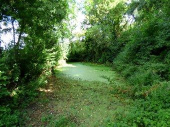 Oving Horse Pond