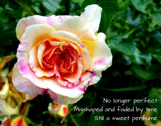 No longer perfect Misshaped and faded by time Still a sweet perfume