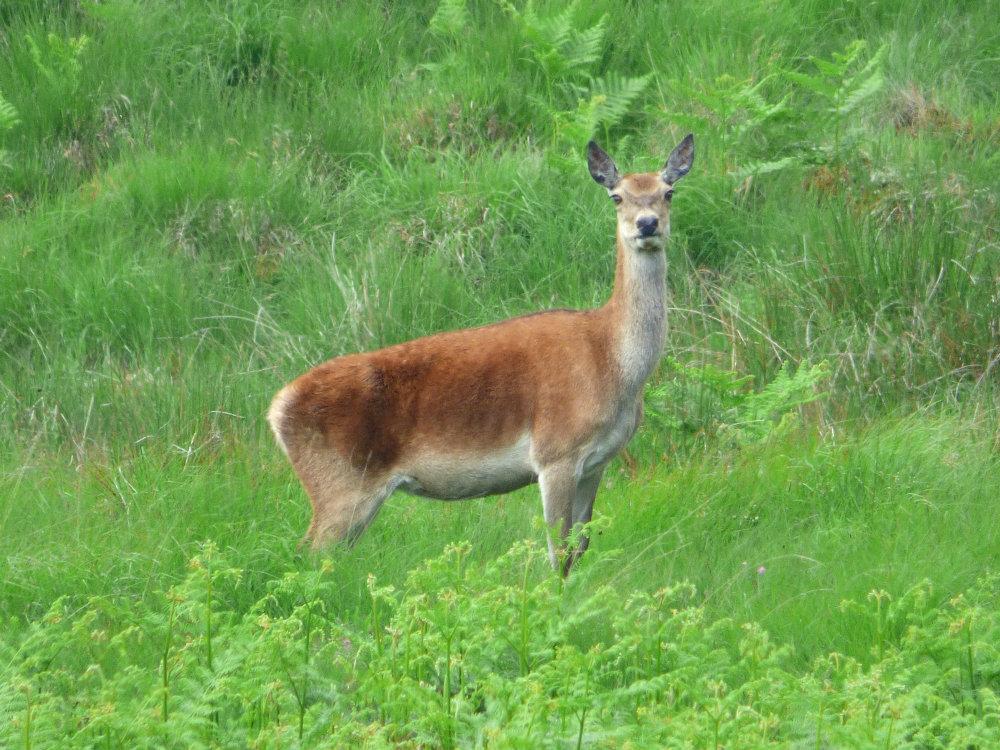 deer derbyshire