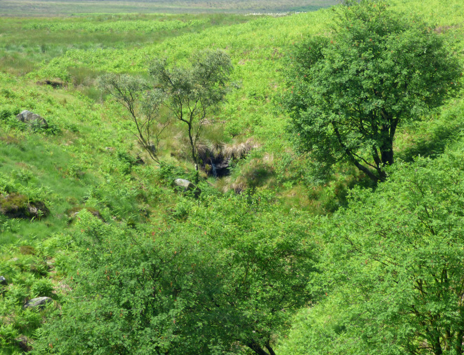 rowan falls