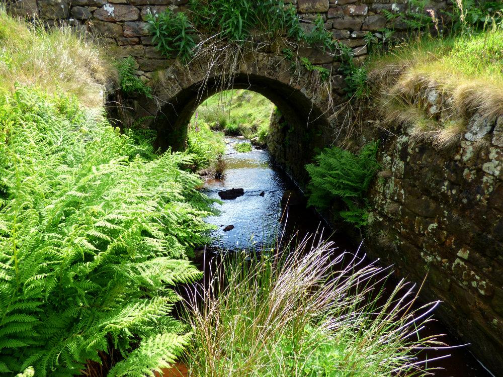 snake adder barbrook merin stone beeley derbyshire ani 078