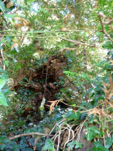 snake adder barbrook merin stone beeley derbyshire ani 186