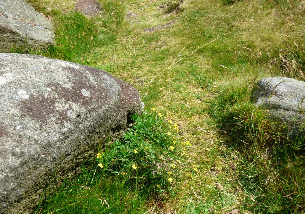 snake adder barbrook merin stone beeley derbyshire ani 228