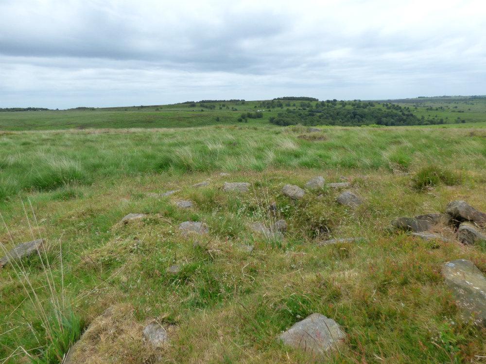 snake adder barbrook merlin stone beeley derbyshire (16)