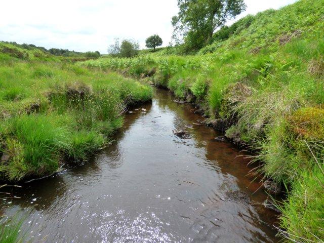 snake adder barbrook  merlin stone beeley derbyshire  (19)