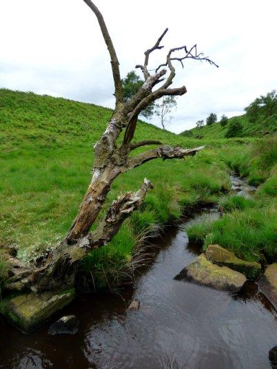 snake adder barbrook merlin stone beeley derbyshire (3)