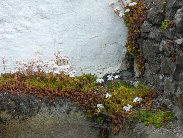 stu's carl wark standing cross castleton black shade pics 119