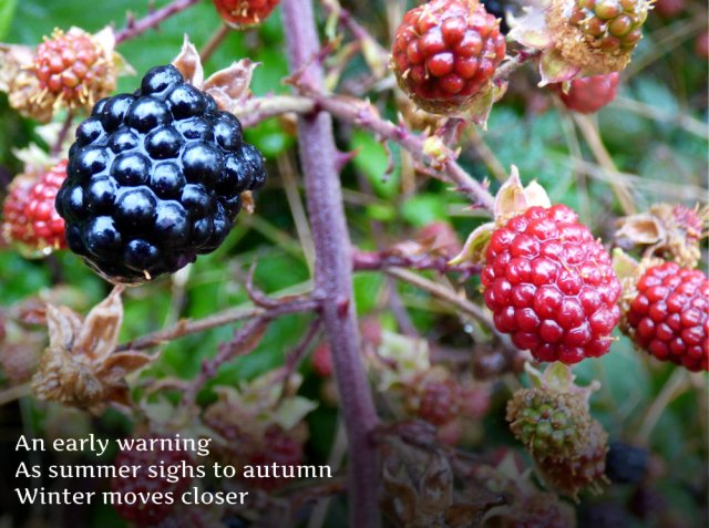 An early warning As summer sighs to autumn Winter moves closer
