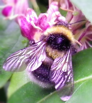 bees 0061