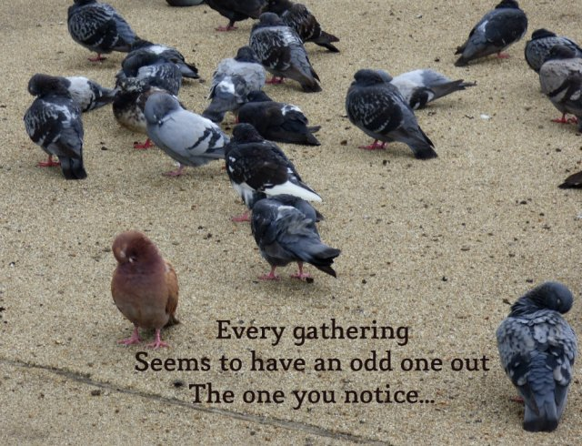 Every gathering Seems to have an odd one out The one you notice...