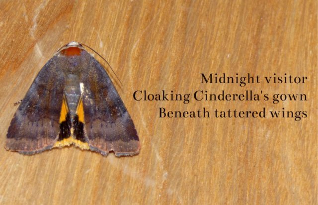 midnight visitor cloaking Cinderella's gown beneath tattered wings
