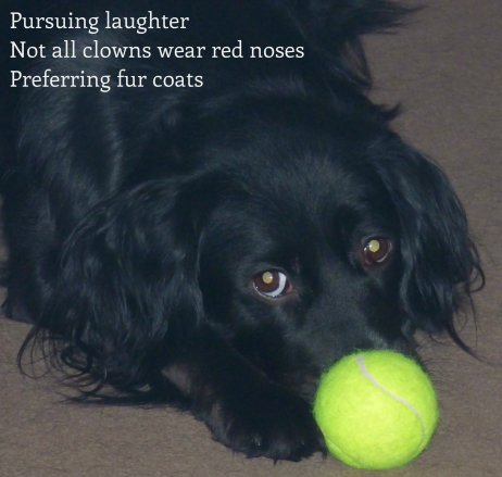 Pursuing laughter Not all clowns wear red noses Preferring fur coats