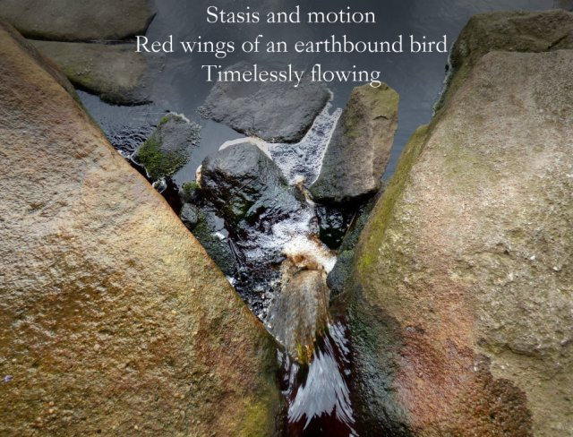Stasis and motion Red wings of an earthbound bird Timelessly flowing