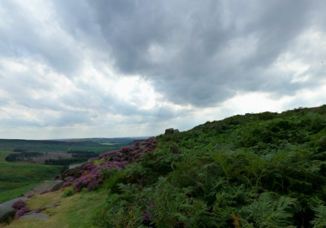 heather 2015 derbyshire, higger tor, beeley circle, edensor, bak 221