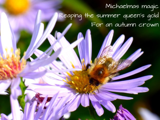 Michaelmas magic Reaping the summer queen's gold For an autumn crown
