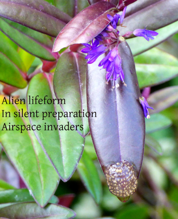 Alien lifeform In silent preparation Airspace invaders