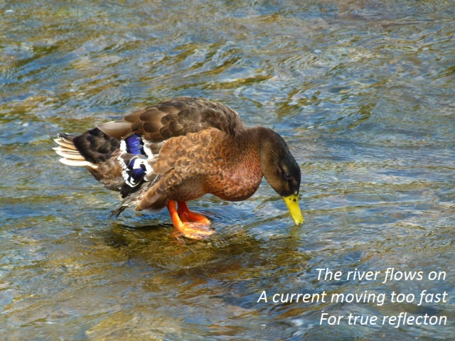 The river flows on A current moving too fast  For true reflecton