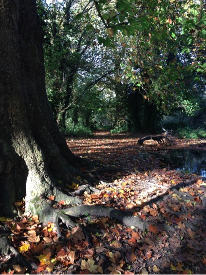 Woodland Path 2